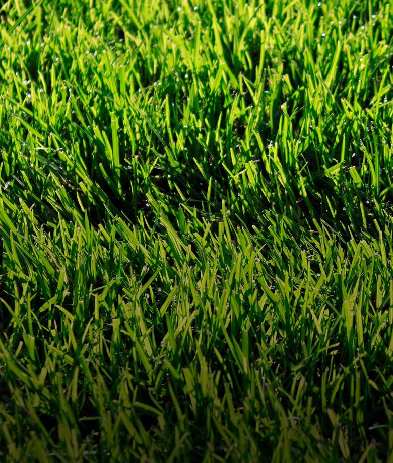 pasto-alfombra-home